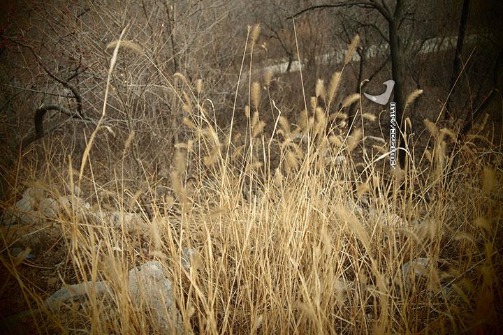 2011年4月9日摄于京东大峡谷