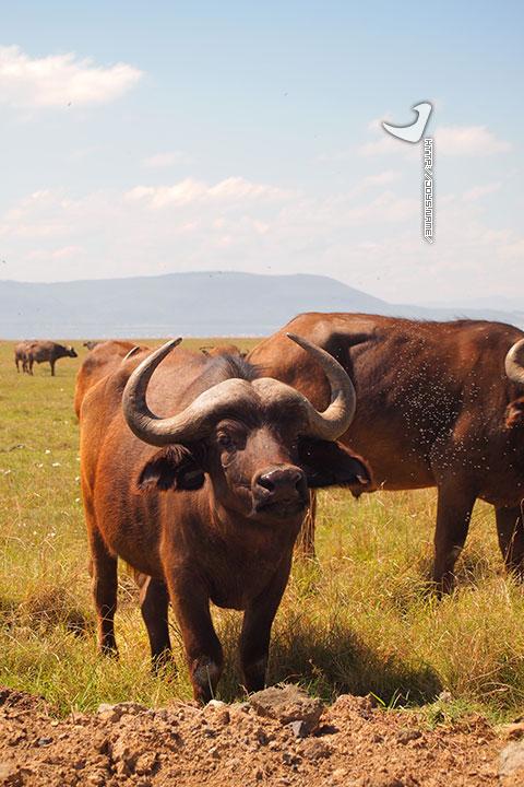 肯尼亚纳库鲁湖