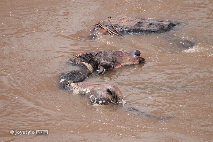 再走肯尼亚——天国之渡马拉河