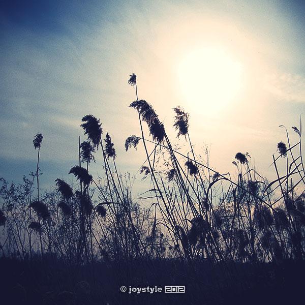 2012年11月20日摄于北京奥林匹克森林公园