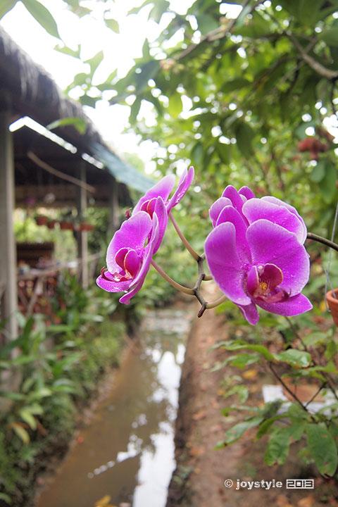湄公河特产食物