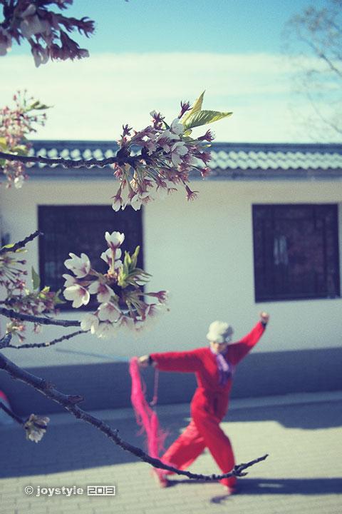 玉渊潭樱花节