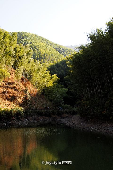 黄山木坑竹海